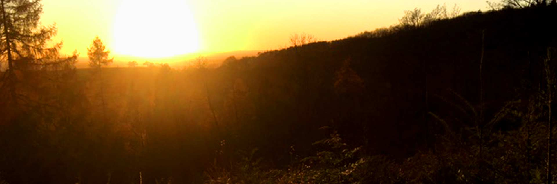 Photo of sun setting upon the forest at Sutton Bank after a good day of Brushcutting by the Metcalfe team